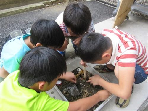 カナヘビの卵を発見!